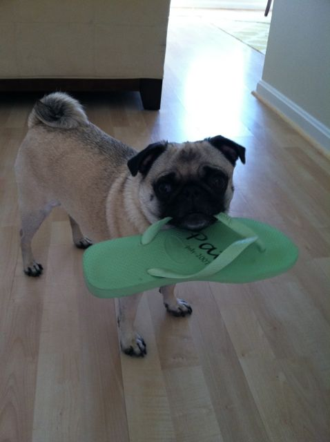 organizational ideas from Brisket the Pug