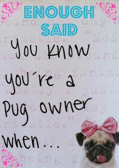 Funny Pugs & Their Owners - You Know You're A Pug Owner When...